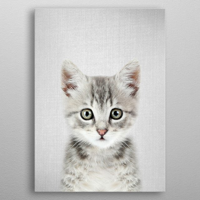 "Kitten - Colorful. For more colorful animals check out the collection in the main page of my shop ""Gal Design"". metal poster"