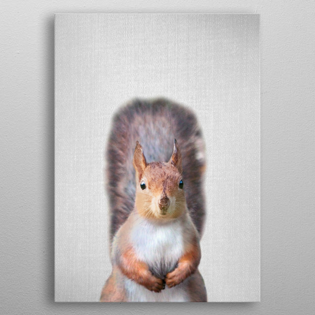 """Squirrel - Colorful. For more colorful animals check out the collection in the main page of my shop """"Gal Design"""". metal poster"""