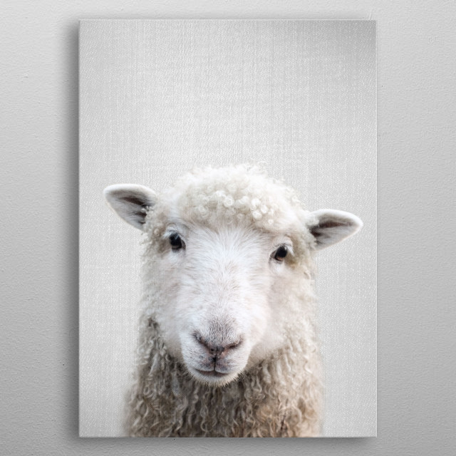 Sheep - Colorful. For more colorful animals check out the collection in the main page of my shop Gal Design. metal poster