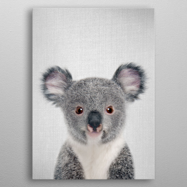 "Baby Koala - Colorful. For more colorful animals check out the collection in the main page of my shop ""Gal Design"". metal poster"