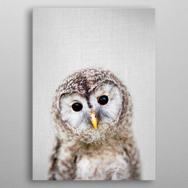 Baby Owl - Colorful. For more colorful animals check out the collection in the main page of my shop Gal Design. metal poster