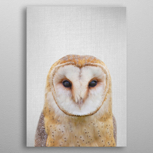 Owl - Colorful. For more colorful animals check out the collection in the main page of my shop Gal Design. metal poster
