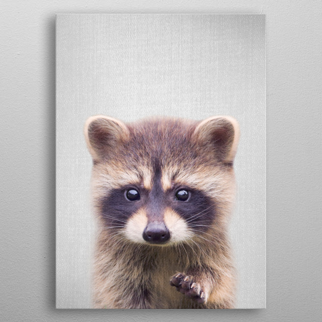 Raccoon - Colorful. For more colorful animals check out the collection in the main page of my shop Gal Design. metal poster