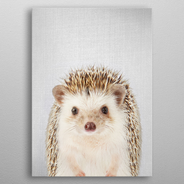 """Hedgehog - Colorful. For more colorful animals check out the collection in the main page of my shop """"Gal Design"""". metal poster"""