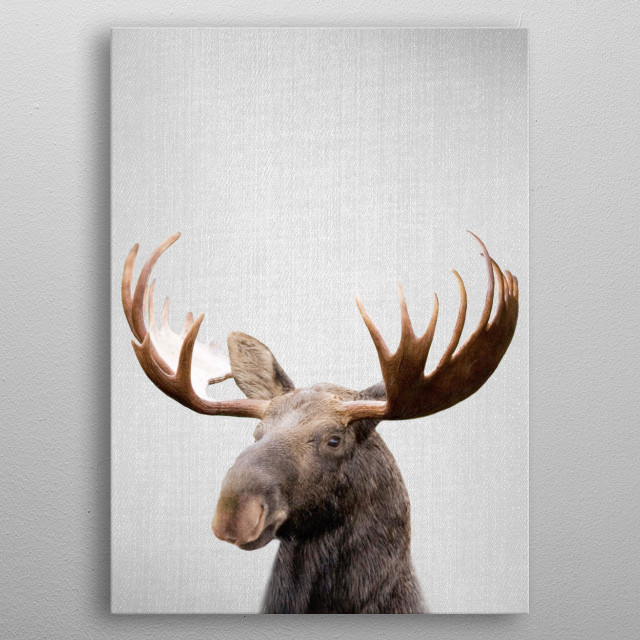 "Moose - Colorful. For more colorful animals check out the collection in the main page of my shop ""Gal Design"". metal poster"