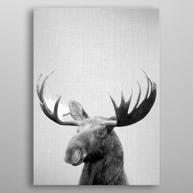 """Moose - Black & White. For more black & white animals check out the collection in the main page of my shop """"Gal Design"""". metal poster"""