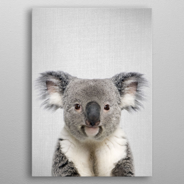 """Koala - Colorful. For more colorful animals check out the collection in the main page of my shop """"Gal Design"""". metal poster"""