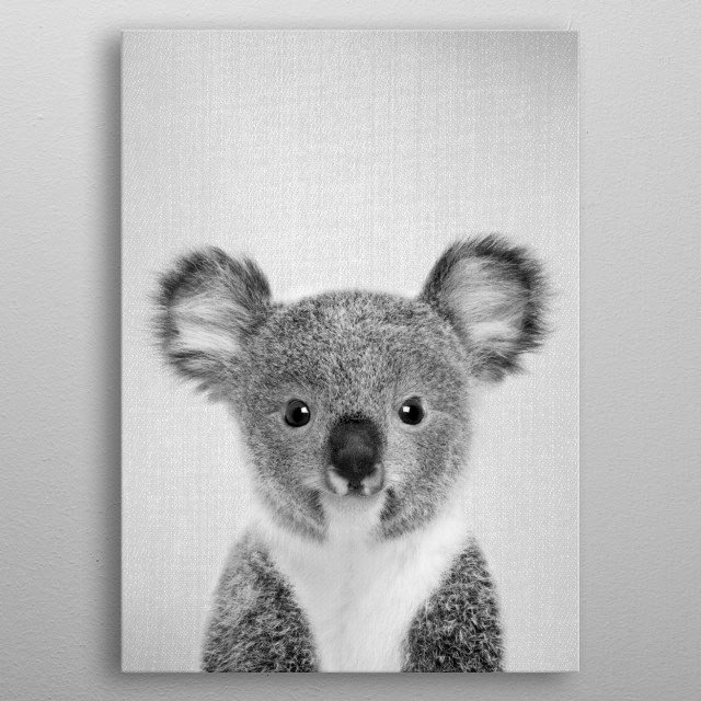 """Baby Koala - Black & White. For more black & white animals check out the collection in the main page of my shop """"Gal Design"""". metal poster"""