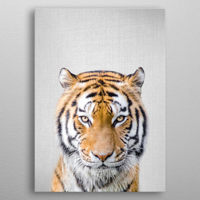 """Tiger - Colorful. For more colorful animals check out the collection in the main page of my shop """"Gal Design"""". metal poster"""