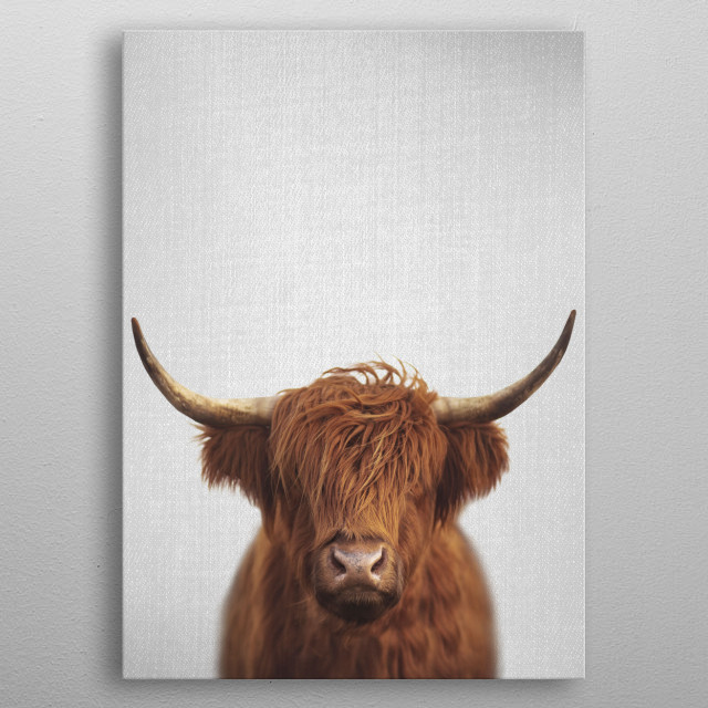 Highland Cow - Colorful. For more colorful animals check out the collection in the main page of my shop Gal Design. metal poster