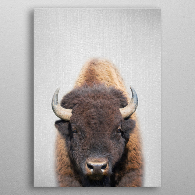 Buffalo - Colorful. For more colorful animals check out the collection in the main page of my shop Gal Design. metal poster