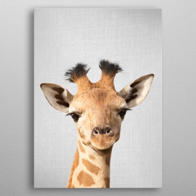 """Baby Giraffe - Colorful. For more colorful animals check out the collection in the main page of my shop """"Gal Design"""". metal poster"""