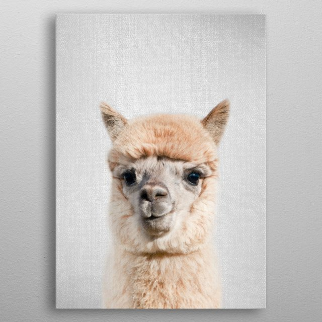 Alpaca - Colorful. For more colorful animals check out the collection in the main page of my shop Gal Design. metal poster