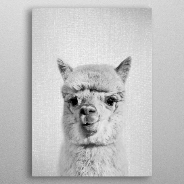 Alpaca - Black & White. For more black & white animals check out the collection in the main page of my shop Gal Design. metal poster