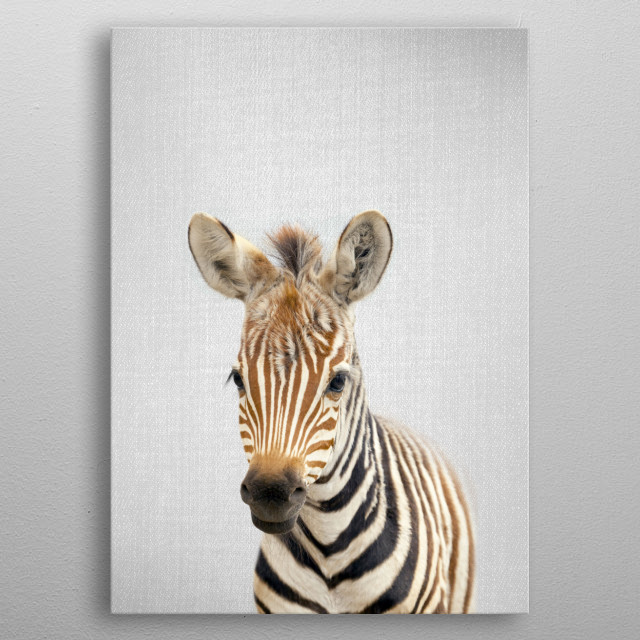 """Baby Zebra - Colorful. For more colorful animals check out the collection in the main page of my shop """"Gal Design"""".   metal poster"""
