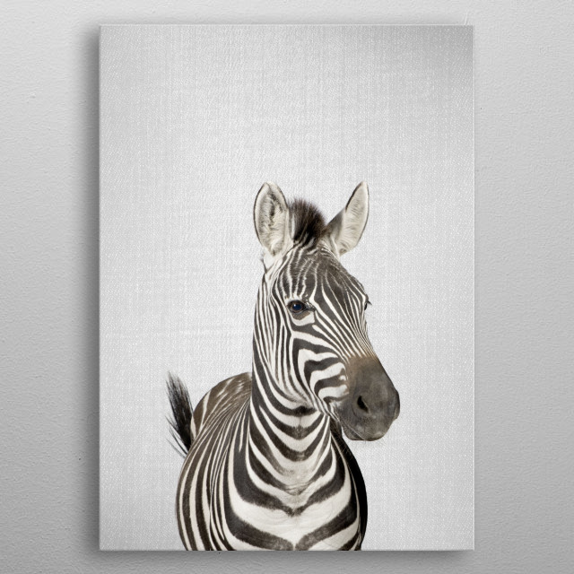 Zebra - Colorful. For more colorful animals check out the collection in the main page of my shop Gal Design.  metal poster