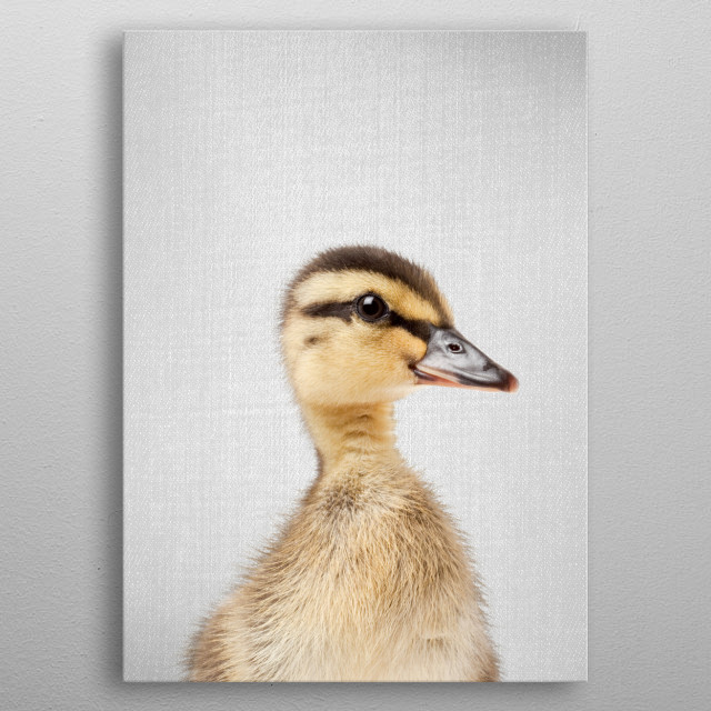 """Duckling - Colorful. For more colorful animals check out the collection in the main page of my shop """"Gal Design"""". metal poster"""