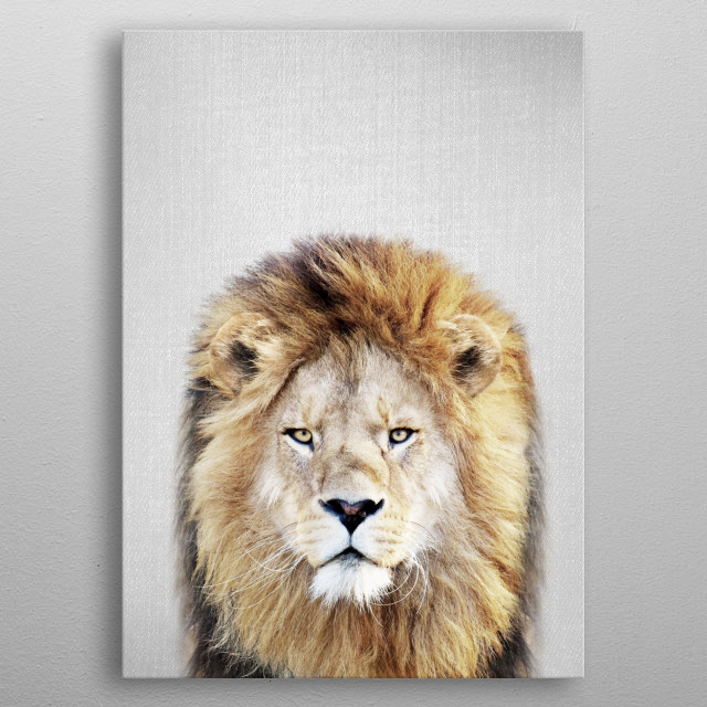 """Lion - Colorful. For more colorful animals check out the collection in the main page of my shop """"Gal Design"""". metal poster"""