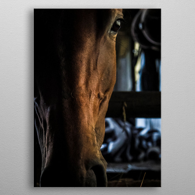 Photography of a horse metal poster