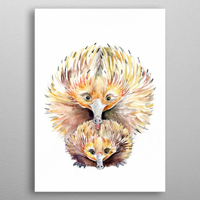 Echidna watercolor illustration from Marc Allante's animal A to Z series.  metal poster