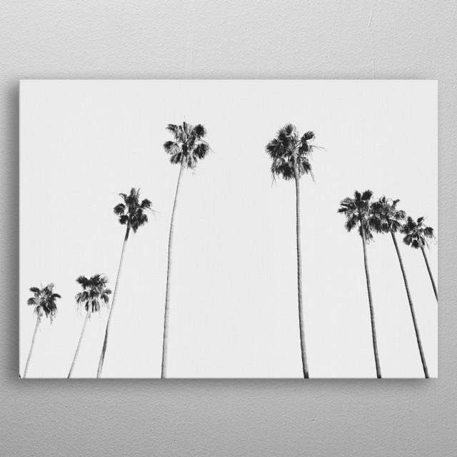 Black & White Palms metal poster
