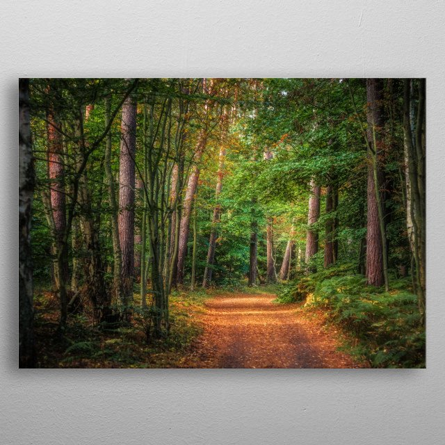 Magical path in the woods of Prerow, Germany metal poster