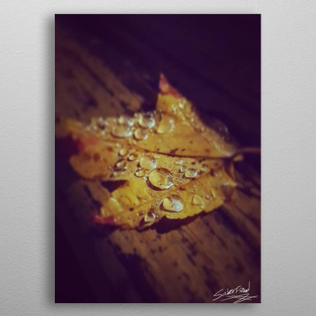 Leaf with rain water on it. metal poster