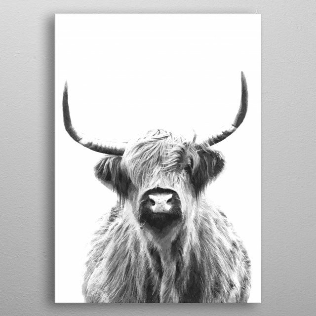 Black and white highland cow portrait. A range of modern photography design, watercolor effect, for animal lovers. metal poster