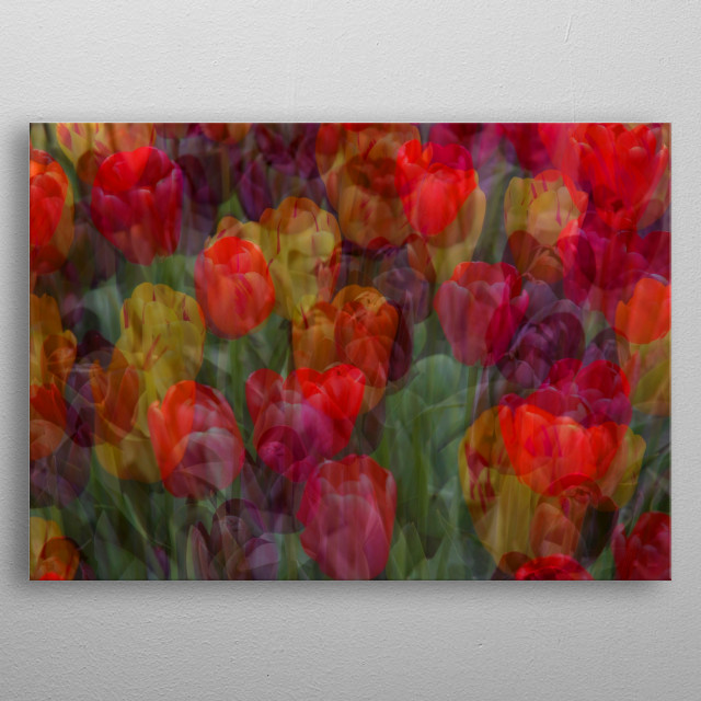 Beautiful tulips at Chatsworth gardens in Derbyshire. 2 photos of tulips have been merged and then toned to create this gorgeous abstract ar metal poster