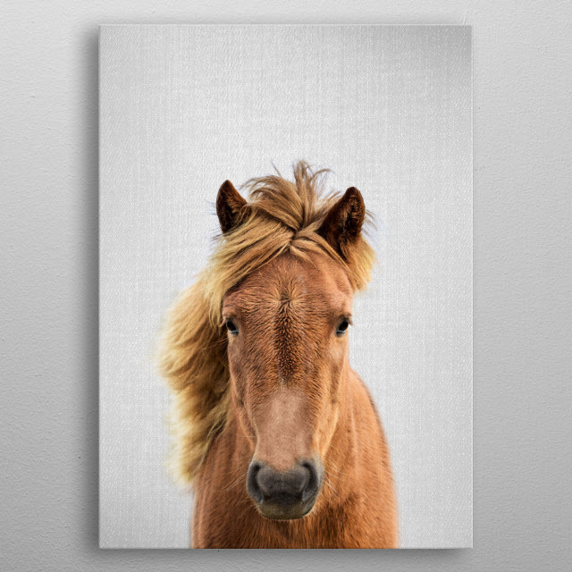 Horse - Colorful. For more colorful animals check out the collection in the main page of my shop Gal Design. metal poster