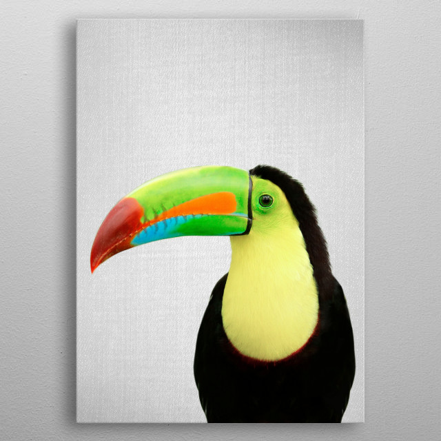 Toucan - Colorful. For more colorful animals check out the collection in the main page of my shop Gal Design. metal poster