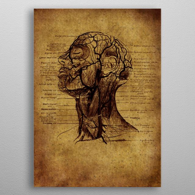 medicine anatomic vintage poster metal poster