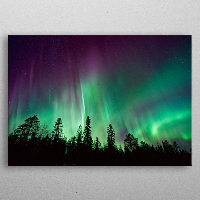 A forest silhouette back lit by green and purple Northern Lights. metal poster