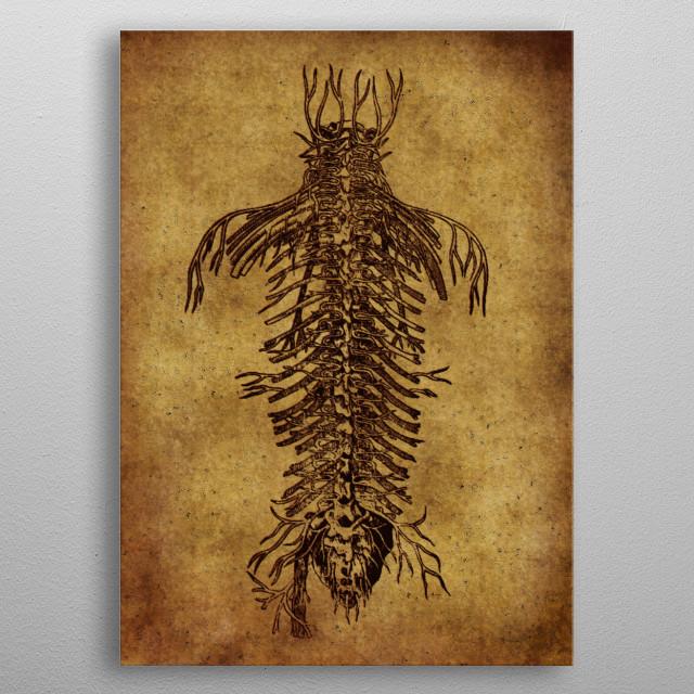 medicine anatomy vintage poster metal poster