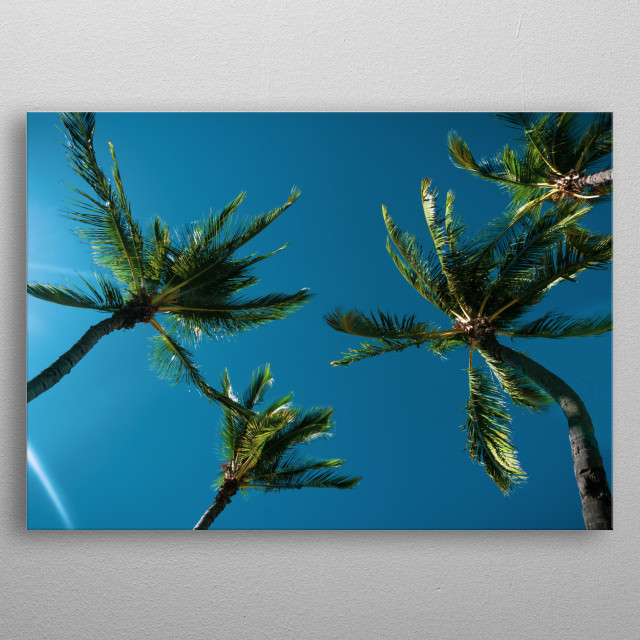 Photo of Hawaiian palm trees that make you wish you were on island right now! metal poster
