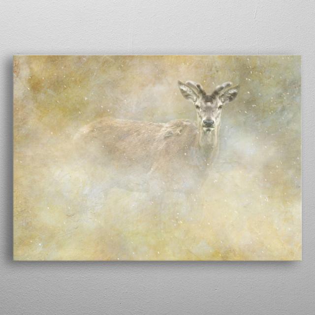 Red deer stag in meadow. metal poster