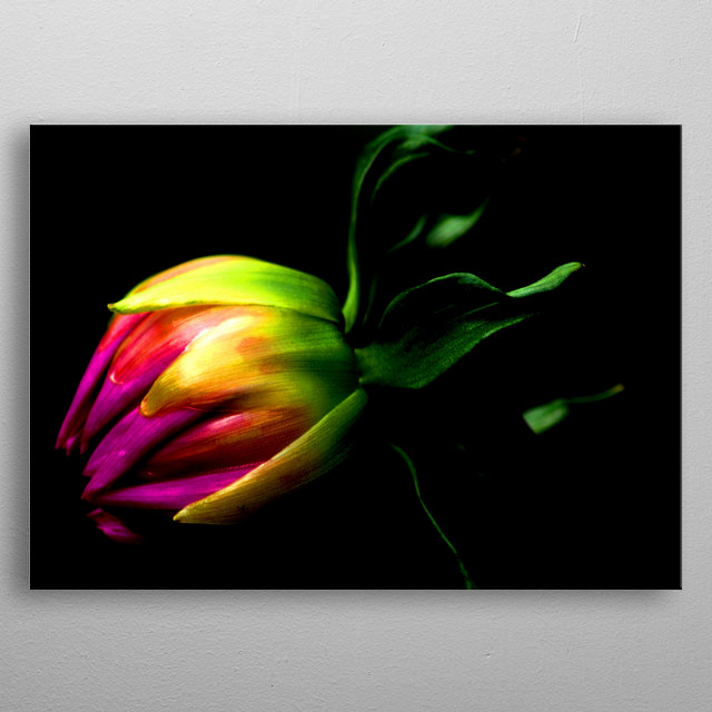 Gorgeous Dahlia Bud photograph digitally enhanced to create this stunning visual artwork. metal poster