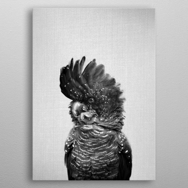 """Black Cockatoo - Black & White. For more black & white animals check out the collection in the main page of my shop """"Gal Design"""". metal poster"""