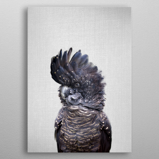 Black Cockatoo - Colorful. For more colorful animals check out the collection in the main page of my shop Gal Design. metal poster