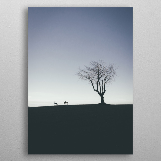 I was super lucky to get this shot. Revisited one of my favorite trees on the top of the hill. I was not alone.  metal poster