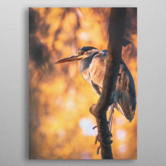 Grey heron (Ardea cinerea) metal poster