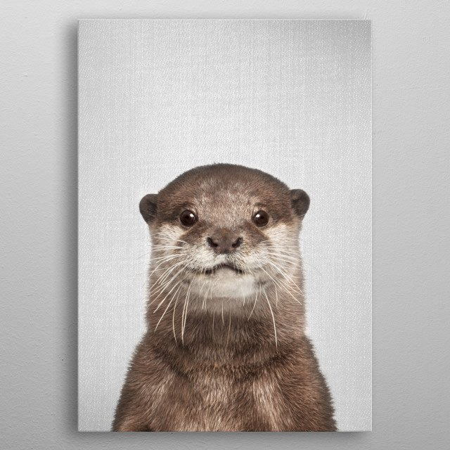 Otter - Colorful. For more colorful animals check out the collection in the main page of my shop Gal Design. metal poster