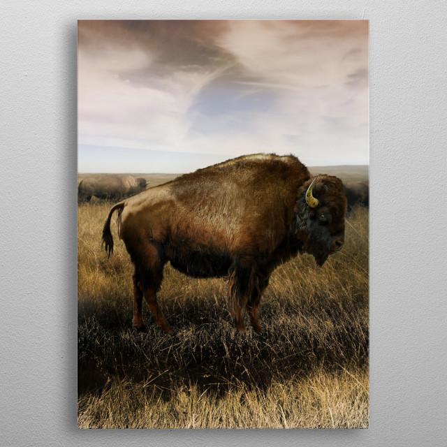 Buffalo in prairie landscape. metal poster