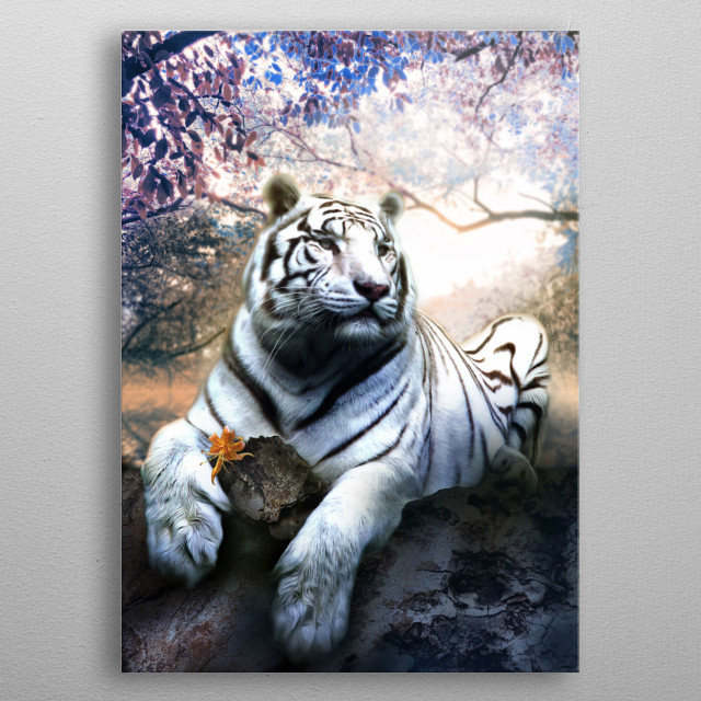 White tiger with tiger lily. metal poster