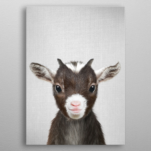 """Baby Goat - Colorful For more colorful animals check out the collection in the main page of my shop """"Gal Design"""". metal poster"""