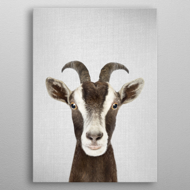 "Goat - Colorful For more colorful animals check out the collection in the main page of my shop ""Gal Design"". metal poster"