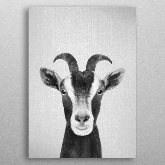 "Goat - Black & White For more black & white animals check out the collection in the main page of my shop ""Gal Design"". metal poster"