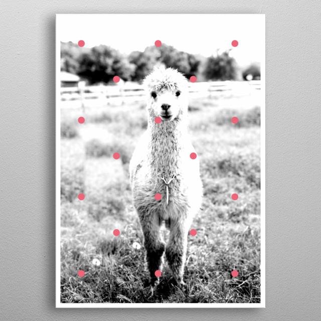 Alpaca metal poster