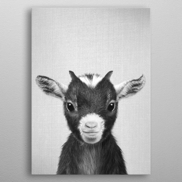 """Baby Goat - Black & White For more black & white animals check out the collection in the main page of my shop """"Gal Design"""". metal poster"""