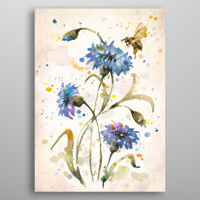 Water colour painting of cornflowers and a bee. By Australian artist Sillier Than Sally (Sally Walsh)  metal poster